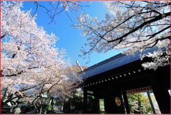 桜の靖国神社.JPG